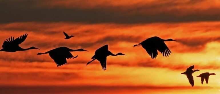 Son_kuşlar_последние_птицы